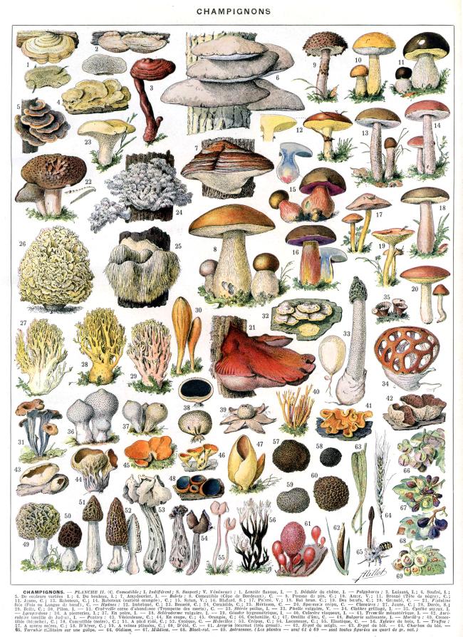 Les champignons culture 1080 cultuur molenbeek - Calendrier des champignons comestibles ...